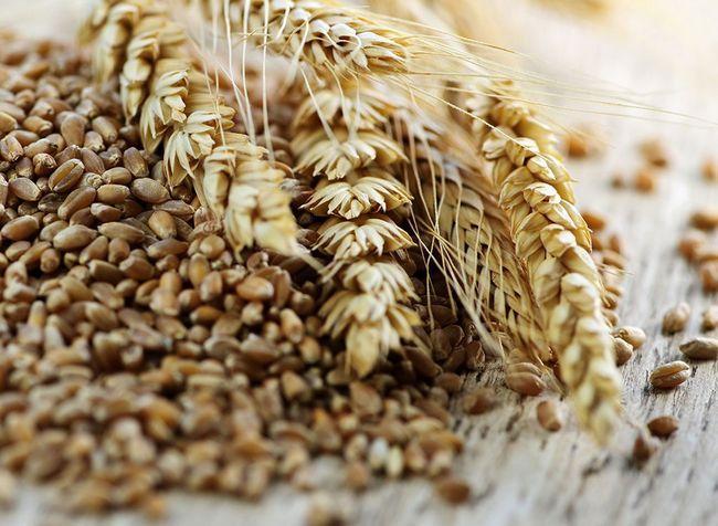 melhores alimentos ricos em proteínas para perda de peso - triticale