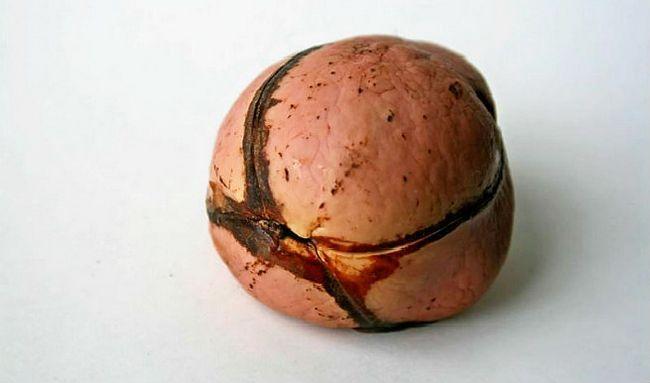 Benefícios de saúde do Kola Nut
